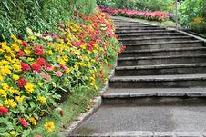 Beautiful Colourful Flower Garden Stock Photography