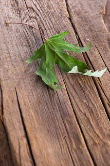 Free Dry Maple Leaf On Old Wooden Background Stock Photo - 23327560