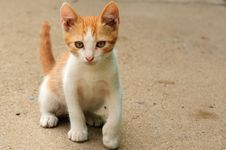 Free Orange Kitty Cat Stock Image - 23328501