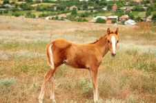 Free Foal Stock Photo - 23328680