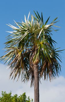 Free Palm Tree Stock Images - 23332734
