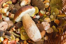 Free Fresh Autumn Mushroom Founded In Forest Royalty Free Stock Photography - 23336567