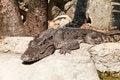 Free The Crocodile Stock Photos - 23347553