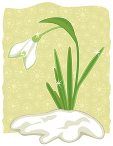 Free Snowdrop Royalty Free Stock Photo - 23348035