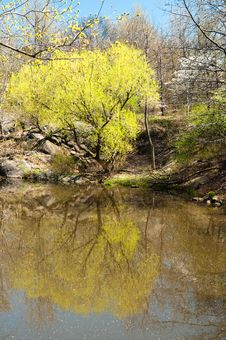Free Spring Stock Photo - 23348530