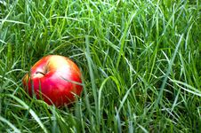 Free Apple In The Grass And Dew Drops Stock Images - 23348554