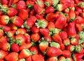 Free Fresh Strawberry Royalty Free Stock Photos - 23358388