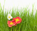 Free Flowers On Fresh Green Grass Stock Images - 23359534