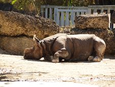 Free Asian Rhinoceros Royalty Free Stock Photos - 23355868