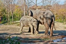 Free Mother And Child Elephants Stock Photos - 23356733