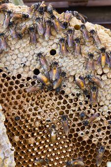 Free Honeycomb Royalty Free Stock Image - 23357746
