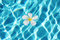 Free Frangipani Flower In The Swimming Pool Stock Image - 23350551