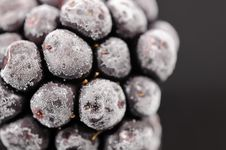 Free Frozen Blackberry Close-Up Stock Photos - 23360723
