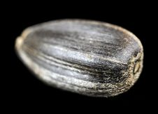 Free Sunflower Seed Macro Stock Images - 23361544