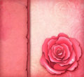 Free Card With Pink Rose Stock Photography - 23373872