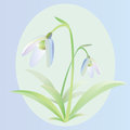 Free Snowdrop Royalty Free Stock Images - 23375899