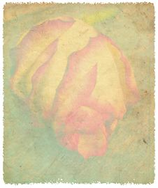 Delicate Rose On Grunge Background Royalty Free Stock Images
