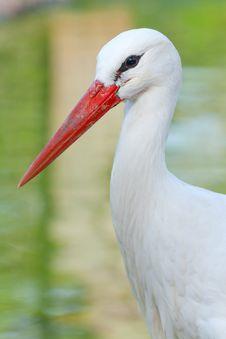 Free Stork Stock Photography - 23376552