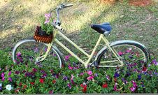 Old Bicycle With Flowers Royalty Free Stock Photography