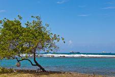 Free Panamanian Reef Seascape. Royalty Free Stock Image - 23385306