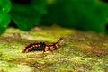 Free Unidentified Beetle Larvae On Dead Tree. Royalty Free Stock Photo - 23390365