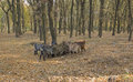 Free Four Goats Surrounded The Tree In Autumn Park And Royalty Free Stock Images - 23391759