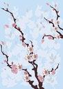Free Flowers, Trees, Sakura Royalty Free Stock Photo - 23397475
