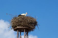 Free A Mother White Stork Bird On A Chimney Royalty Free Stock Image - 23394086