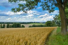 Free Rural Summer Landscape Stock Photography - 23394092