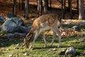 Free Bambi Stock Photo - 2343350