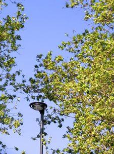 Streetlight And Leaves Stock Image