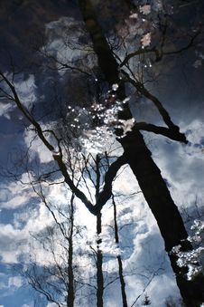 Free Landscape Reflection In Water Stock Photography - 2341642
