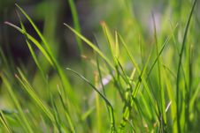 Free Green Grass Background Stock Photography - 2342872