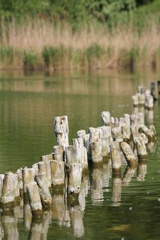 Free Pond S Shore Royalty Free Stock Image - 2343956