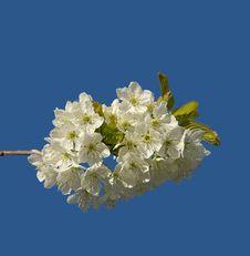 Free Fruit Flowers Stock Photo - 2344370