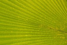 Free Tropical Leaf Royalty Free Stock Photos - 2344838