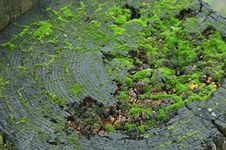 Free Green Moss Stock Photos - 2345293