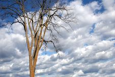 Free Dramatic Sky And Tree Royalty Free Stock Photography - 2345977