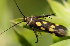 Free Yellow Spots Insect Stock Images - 2346704