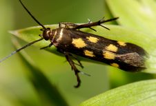 Free Yellow Spots Insect Royalty Free Stock Image - 2346706