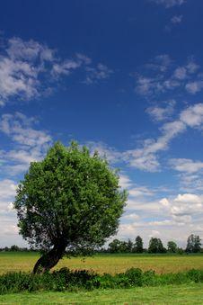 Free Single Tree On Reaped Acre Stock Photos - 2347093