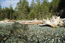 Free Pebbled Beach Stock Photos - 2347523