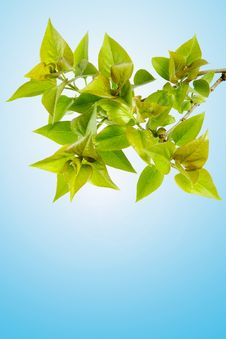 Free Perfect Spring Foliage Royalty Free Stock Photos - 2348408