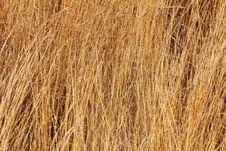 Free Field Grass Stock Image - 23401451