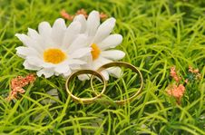Free Rings And Daisies Royalty Free Stock Photo - 23409335