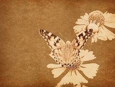 Free Grunge Butterfly Background Royalty Free Stock Photo - 23409495
