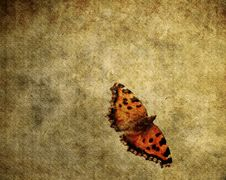Free Grunge Butterfly Stock Image - 23409511