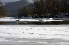 Free Swans Stock Photos - 23410663
