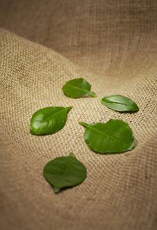 Free Leaves On Burlap Royalty Free Stock Image - 23411406