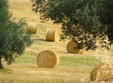 Free Field With Haystacks, Rural Landscape Royalty Free Stock Photography - 23413207